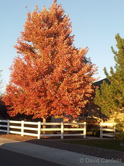 October 14, 2014 - Fall colors in the north metro area. ( (David Canfield)