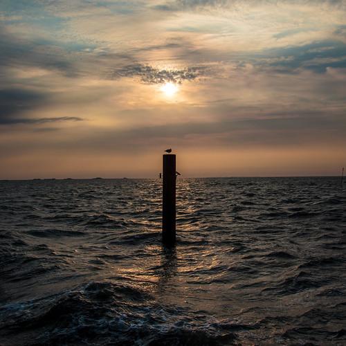 Seagull in the Sunrise; Möwe bei Sonnenaufgang (1:1)