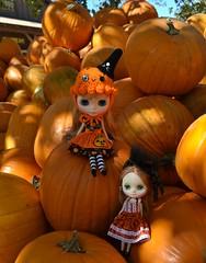 Gracie's First Fall & Pumpkin Patch