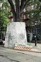 (pop archaeologist) Tags: street city nyc newyork tree film brooklyn crownheights nikonfe easternparkway micronikkor concretesupport 55mm28 ektar100