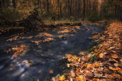 Glow in the Woods (KvonK) Tags: longexposure fall leaves golden woods october stream release tripod wideangle cable circularpolarizer 2014 100x nd8 monarchwoods kvonk