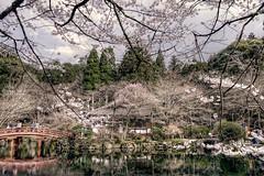 Japan Kyoto . .   Skura in Daigo-ji   HDR    DSC_8419 (Ming - chun ( very busy )) Tags: travel lake flower reflection japan cherry 50mm nikon kyoto blossom drew   cherryblossom  sakura nikkor f18   d800  50mmf18      traveljapan f1850mm   sukura