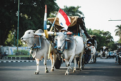 Cow Chariot (erkahar) Tags: ex indonesia cow dc f14 d70s sigma marching yogyakarta jpeg chariot 56 lightroom 2014 30mm hsm