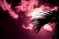 Cuban sun (Janice Judd) Tags: sunset summer sky cloud sun silhouette nikon outdoor cuba palm tropical caribbean colourful d3100
