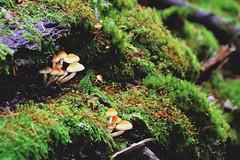 141019 Fungus sighting (Fob) Tags: trip travel october fungus wa orcasisland mountainlake 2014 moranstatepark