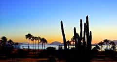 First Light (malcolmharris64) Tags: ocean trees sunset sea cactus sky seascape sonora sunrise landscape mexico bay palm bahia saguaro sancarlos seaofcortez bocochibampo