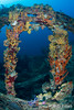 RMS Rhone (andy_deitsch) Tags: location northamerica caribbean wreck geographic bvi rhone 2014 divesite