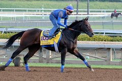 Bayern (kimpossible pics) Tags: horse racetrack bayern jockey horseracing racehorse thoroughbred arcadia equine santaanita santaanitaracetrack workouts breederscup bobbaffert exerciserider morningworkouts