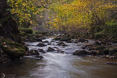 Little trickle (paulraybouldphotography) Tags: trees motion green nature wet water ecology beautiful beauty rock stone rural river landscape bush europe day force natural outdoor scenic fast blurred run clean foliage clear environment through colourful lush freshness