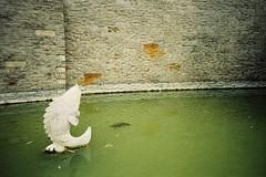 (lovelyivan) Tags: china film lomography kodak lomolca 135   c41 color200 minitar132mmf28 travelingtheworld