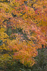 LDS Temple Grounds  (40) Wed 29 Oct 2014 (smata2) Tags: autumn fall maryland foliage kensington lds mormontemple montgomerycounty