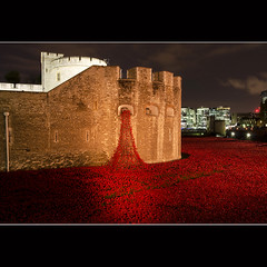 #12 (chris.selby) Tags: world city flowers red england london tower project ceramic blood war britain first poppy poppies land rememberance week british years 100 12 ww1 swept moat 1914 seas 52 commemoration 2014