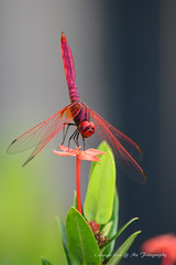 Dragonfly (me.studio) Tags: micartttt