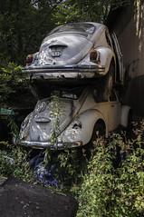VW 1300 1966 (382) (belowodje) Tags: graveyard vw volkswagen lost beetle rusty places junkyard kfer kaufdorf
