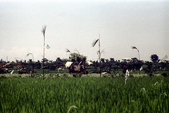 24-603 (ndpa / s. lundeen, archivist) Tags: bali color film field rural 35mm indonesia landscape flag traditional nick southpacific 24 1970s 1972 indonesian bamboopole balinese dewolf oceania pacificislands penjor nickdewolf photographbynickdewolf penjors reel24