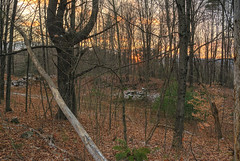 The Preamble (Crick3) Tags: trees winter sunset leaves nh obtuse pineforest wchesterfield welcomehill