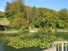 Arlesheim, Ermitage, 12.10.16 (ritsch48) Tags: arlesheim ermitage basellandschaft weiher