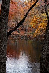 Fall & reflections (oztas) Tags: oztas yedigller seenity fall