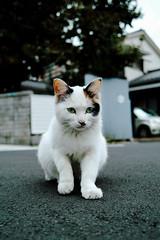 neko-neko1520 (kuro-gin) Tags: cat cats animal japan snap street straycat