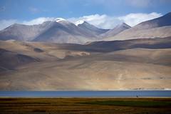 Landscape around Lake Tso Moriri, India 2016 (reurinkjan) Tags: india 2016 janreurink himachalpradesh spiti kinaur ladakh jammuandkashmir kargil tsomoriri himalayamountains himalayamtrange himalayas landscapepicture landscape landscapescenery mountainlandscape visipix