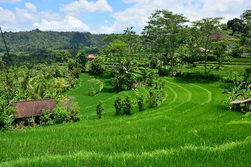 Sidemen sawah countryside (Bali, Indonesia 2016)