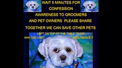 Confession Of How I Was Killed At The Groomer(TUTORIAL) (OdeteCondeOliveira) Tags: tutorial groomer pain suffering necropsy neck strangled dog liar police animal welfare leash table blood review princess toronto canada pet love googlereview ontario hardcore red crime photoshop choke sad die surrealism murder deviantart autopsy negligence