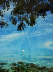 Good morning, moon (SarahBelle17) Tags: moon fullmoon morning reflection sky tree clouds tucson love
