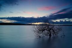 Rising tides (PhotCraft) Tags: 10stop bigstopper nireland larne ballyboley killylane ireland photcraft sunset tree sony sonya7
