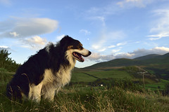 A Walk in the Clouds. (Mike & Indy) Tags: laddie dog dogs bordercollie sheepdog llanfairfechan northwales mountains carneddau landscape dinas explore holidaysvacanzeurlaub