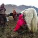 Mulheres tirando leite dos iaques