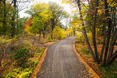 Autumn Lane (wyojones) Tags: newyork newyorkcity manhattan centralpark autumn fall trees color rpad lane curve lamp leaves calm serene park parkscape