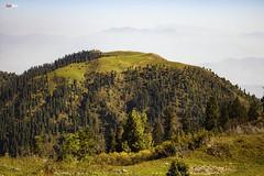 Meadows - Lama Dana (AQAS.Clicks) Tags: landscape pakistan nature tracking nathiagali murree miranjani mushkpuri forest