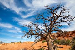 Canyonlands (joshbousel) Tags: canyonlands canyonlandsnationalpark islandsinthesky islandsintheskydistrict northamerica travel unitedstates unitedstatesofamerica upheavaldomeoverlook upheavaldomeoverlooktrail usa ut utah nationalpark