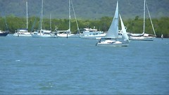 DSCN0230 (rojam1000) Tags: things see while water carting from cairns harbour