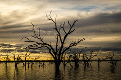 Time stood still (DingoShoes - life's a dream) Tags: menindee lake trees sunset dayend gold golden silhouette sky clouds water nature atonewithnature nikond7000 afsnikkor18105mm13556ged