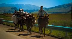 upload (LiChen.7) Tags: leica leicar street people horse canon natuer colours art sky mountain boy