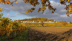 Autumn in Winequarter 16.09 (lady_sunshine_photos) Tags: wildendürnbach galgenberg autumn herbst weingärten vineyards kellergasse kellerberg cellarlane weinviertel winequarter loweraustria niederösterreich at austria österreich europe europa ladysunshine ladysunshinephotos wonderfulworld supershot blätter leafs kirchturm churchtower tree baum sonyalphanex7