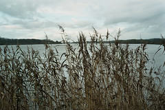 reed (InSoManyWords) Tags: film fujisuperia200 fujifilm 35mm rollei35 reed river belgium
