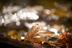 Simply autumn...(3) (cosovan.vadim) Tags: autumn fall forest river leaf bokeh sparkles nikon nature d750 tamron 70200mm f28 dof