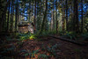 Abandoned Shack in the Dense Forest (Isaac Hilman (@lightofisaac)) Tags: shack old decrepit aged shanty woods forest shadowed contrast light highlight bc vancouverisland canada nikon d800 solitude alone solo