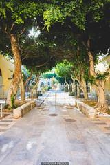 Warm trees (Nicola Pezzoli) Tags: favignana sicilia sicily island egadi summer sea water colors nature canon tourism stabilimento florio tonnara light sun sunset trees