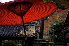 Parasol and Autumn Leaves (tez-guitar) Tags: temple architect autumn autum 紅葉 autumn leaves maple wood forest pentax pentaxart