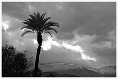 Christmas in the Desert (2) (The Spirit of the World) Tags: california nature landscape clouds sky monochrome bw desert ranchomirage southerncalifornia mountains rain snow peaks palm palmtree