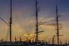 DSC3475 (ste.wi) Tags: segelboot segelschiff barke mast hamburg hafencity rickmer rickmers takelage rigging schiff sony ilce6000 alpha6000 sunset sonnenuntergang yellow orange clouds