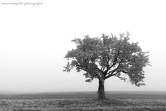 Lonely tree in the mist.  Middle of Nowhere, Czech Republic. (VeRoNiK@ GR) Tags: road czech republic europe photography photoshop mist misty fog foggy tree nature meadow prairie flickr blackandwhite bw