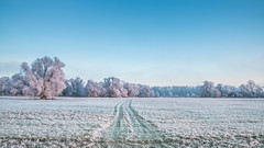 frozen (bocero1977) Tags: landscape winter nature germany outdoor weather light trees blue frozen frost colors trail sky green cold meadow wide ice