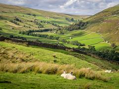Thwaite Landscape, Yorkshire Dales (Bob Radlinski) Tags: england europe greatbritain richmondshire thwaite uk yorkshire yorkshiredales travel
