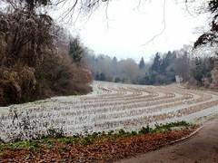 Bruchsaler Hgelland im Dezember (infactoweb) Tags: bruchsal eichelberg wandern hgel hgelland kraichgau infactoweb