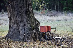 Sekretär aus Pflaume (jonasck) Tags: sekretär carpenter wood pflaume gesellenstück möbel design schick foto natur bau baum