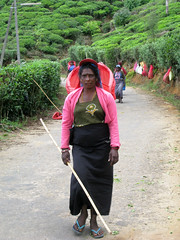 Women Tea Pickers, Nuwara Eliya, Sri Lanka (#01) (geoff-inOz) Tags: tamil woman teapicking nuwaraeliya plantation srilanka heritage ceylon tea